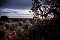 foto-ros-oliveres1