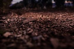 foto-ros-oliveres2