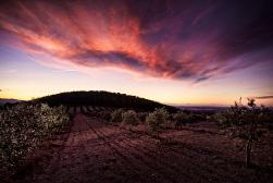 foto-ros-oliveres3